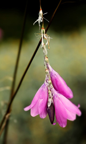Edinburgh Botanic Gardens August 2012 321 | by Sweet Scot