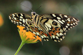 Earnley Butterflies, Birds & Beasts 20-09-2012 | by Karen Roe