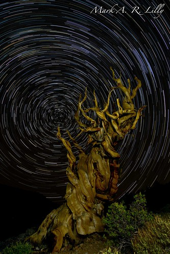 Bristlecone Pine Forest - September 16, 2012 | by markarlilly