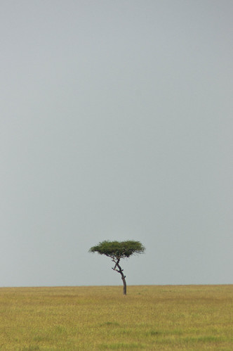 Solitary Tree | by Greg McMullin