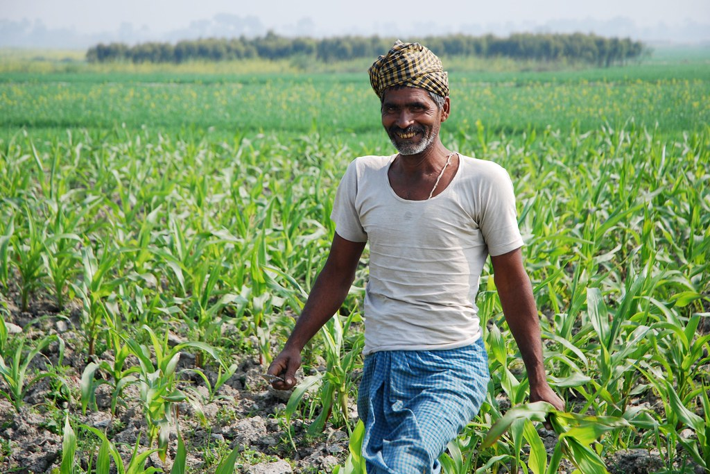 Farmer at work in maize field in Bihar, India | A farmer ...