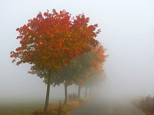October mist | by RainerSchuetz