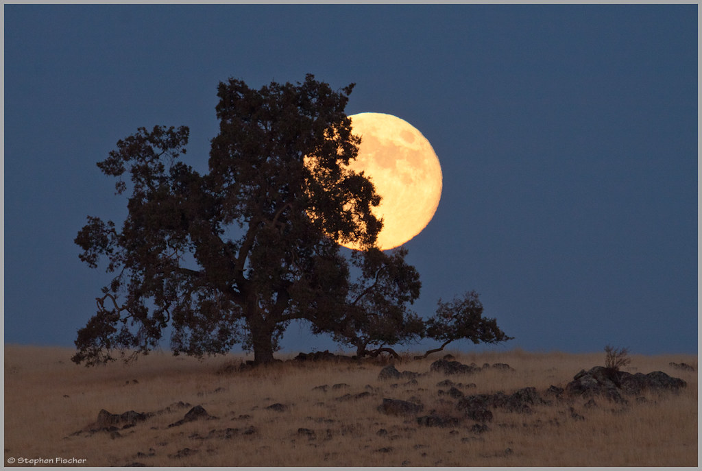 Blue Moon   More real than Peter Lik: www.lik.com/thework ...