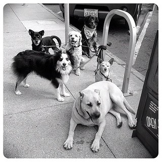09.11.12: the pack #dailyphoto #photoaday #dogs #igerssf #petstagram | by PJ Taylor Photo