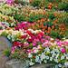 Gaily Coloured Garden