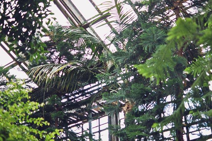 botanic_garden_midi_dress-6