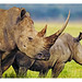 WWF-Canon Pic of the Week - Rhinos in crisis
