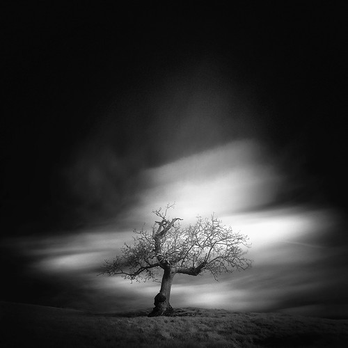 ѱ tree 1 / IV | by Andrew J Lee