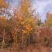 YNP-GTNP-fall-colors01