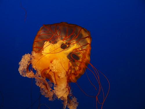 Image Result For Aquarium Calgary