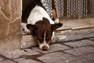 dog tired | by jenny downing