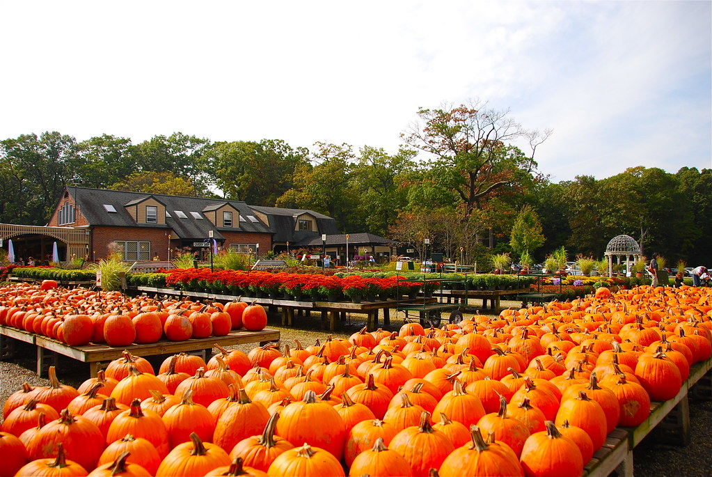 Long Island Has Pumpkins At Martin Viette Nursery 2 Weeks Flickr
