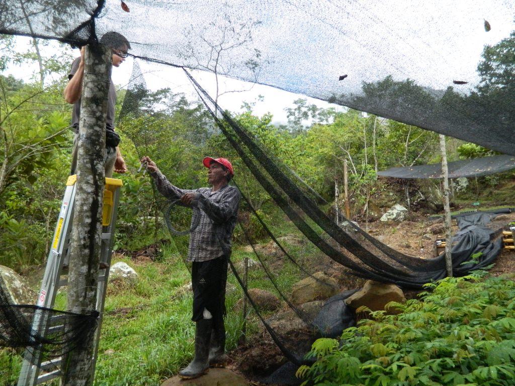 Instalaci n de polisombra vivero mata de cacao 8 rna p for Matas de viveros