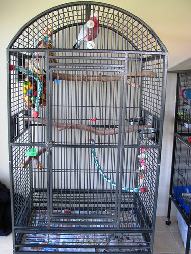 how to set up a parrot cage