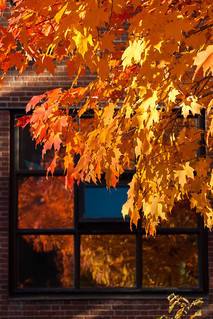 Window into Fall [299/366] | by timsackton