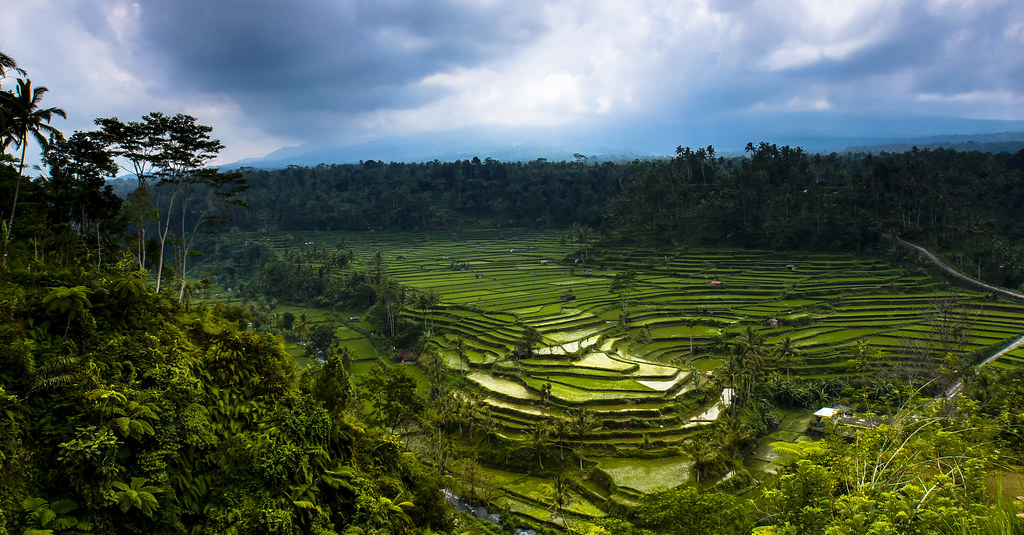 View over the rice terraces