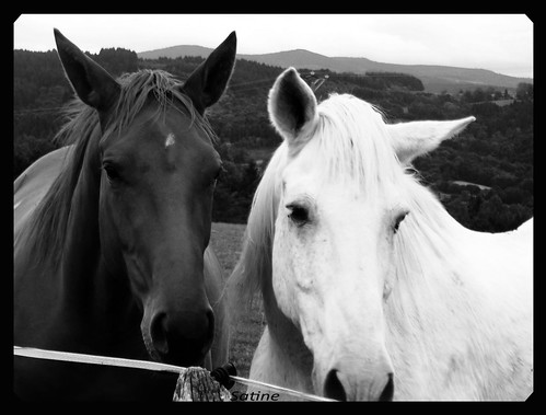 images of horses in black and white - photo #25