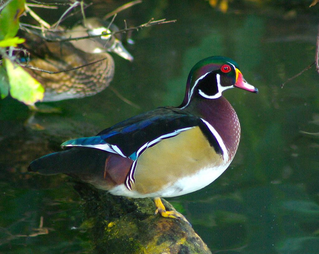 Audubon Zoo XXX | Allison Stillwell Young | Flickr