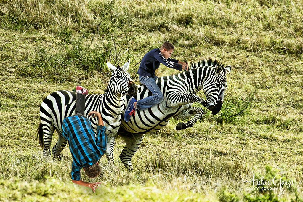 Boys On Safari Zebra Riding So My Mom Went On A Photo