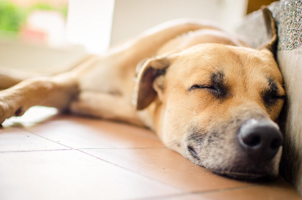 Facebook Dog Days Pet Lodge Vandalia