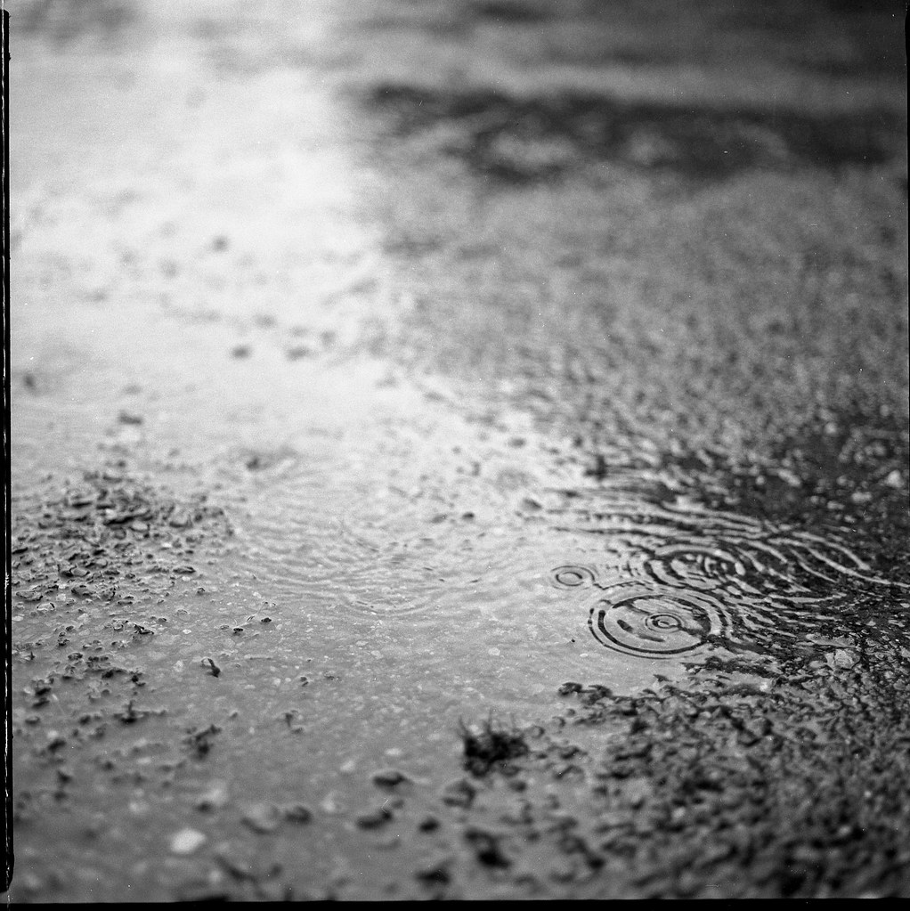 Pluie | Bronica sq-a + ilford fp4 120mm Automne 2012 ...