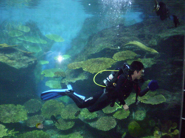 Bangkok Aquarium Cleaning I guess it really is the only wa ...