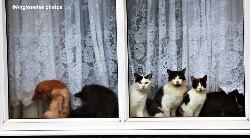 Cats in a window in Oxlow Lane