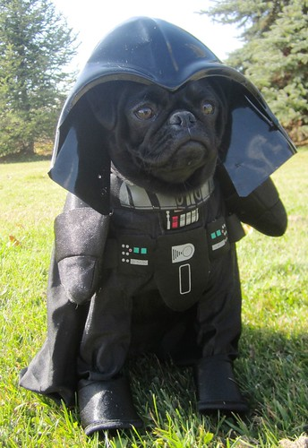 Darth Vader Dog | by Petful.com