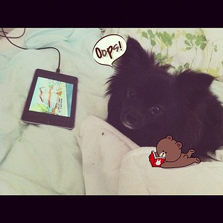 "Yuki caught in the act. ""I watch King of the Hill when you're not looking."" 