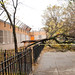 Clinton Hill Tree Down