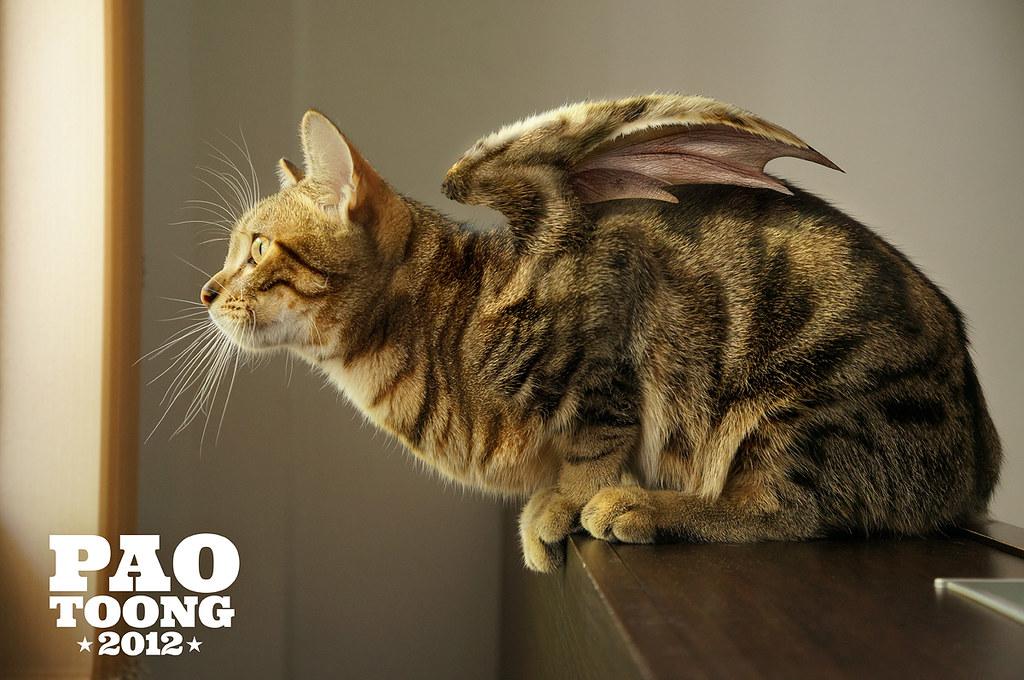 Et si les membres étaient des chats ? o.O 8105011318_9bb5ef921c_b