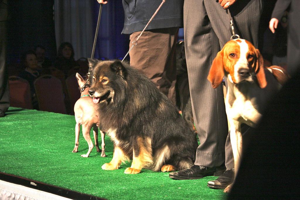 Dog Show Event In Beddington
