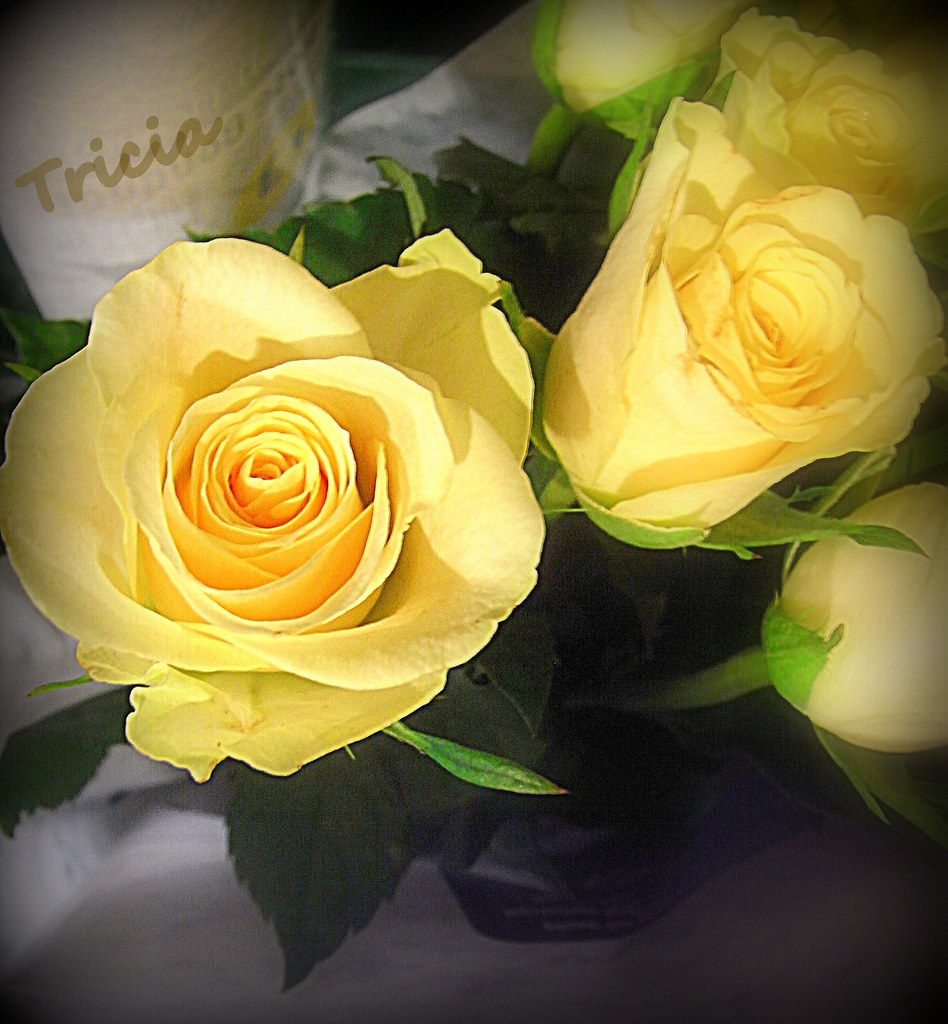 Yellow Rose Means Friendship Happy Monday Morning Flickr