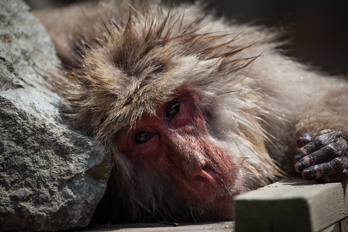 Yudunaka Snow Monkey | by adametrnal