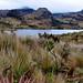 ecosistema Páramo del Parque Nacional Cajas,
