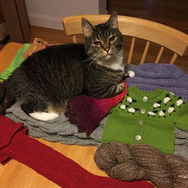 Finally, Murderface can lay on all my knit stuff and get fur all over it.