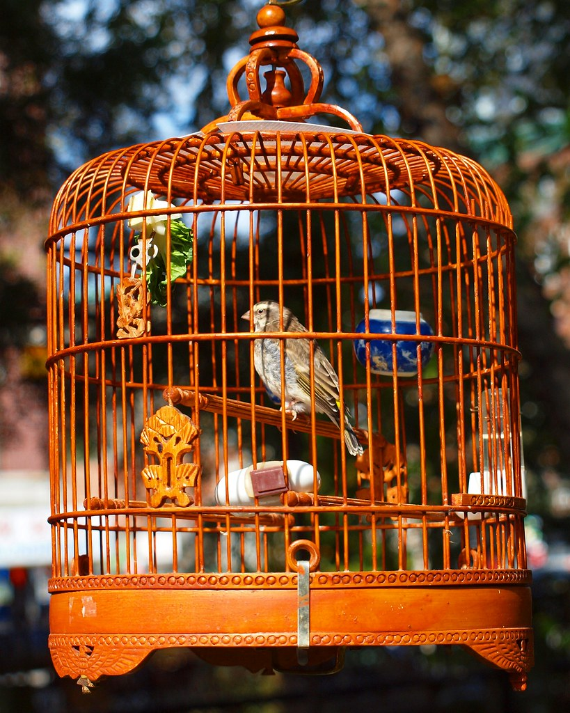 Hua Mei Bird Garden, Chinatown, Manhattan, New York City | Flickr