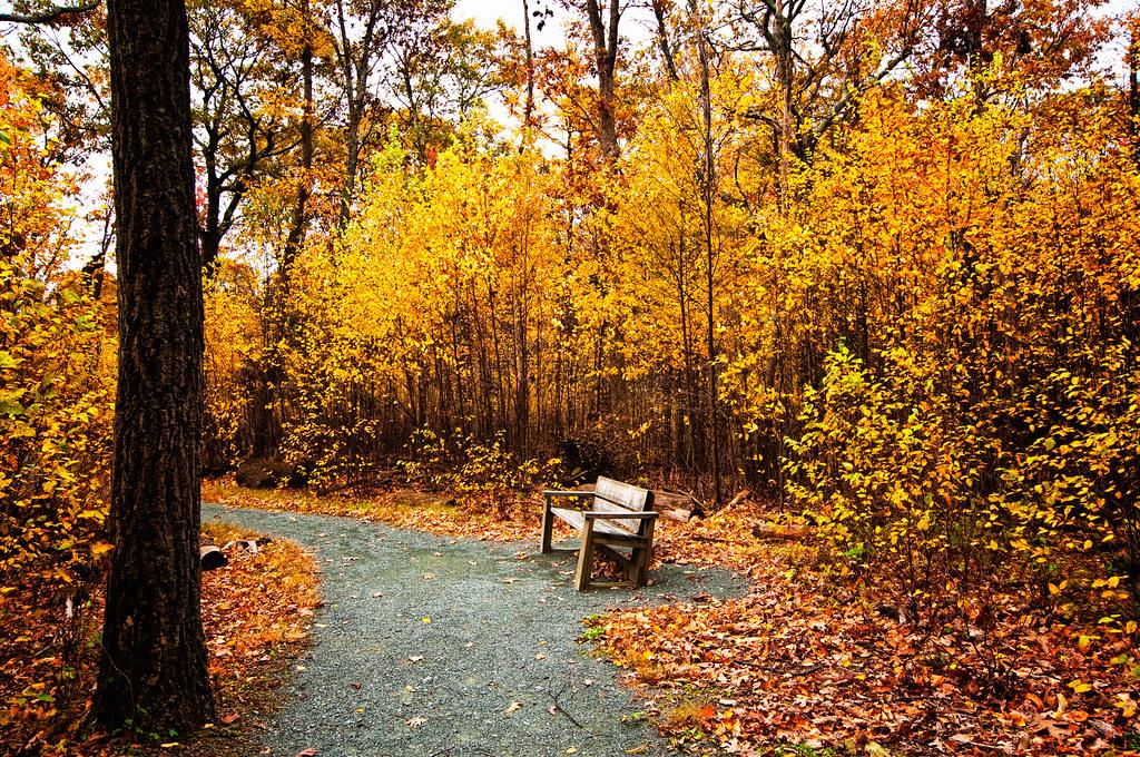 Bench Along Limberlost Trail Shenandoah National Park Vir