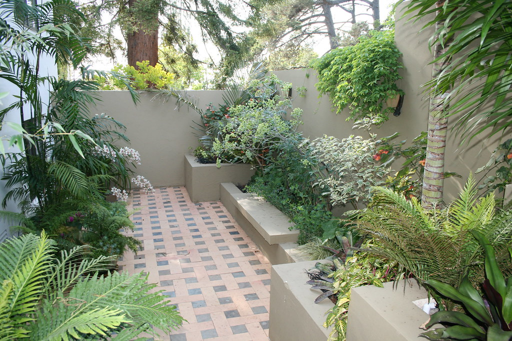 Foliage texture and contrast in a north facing courtyard for North facing back garden designs