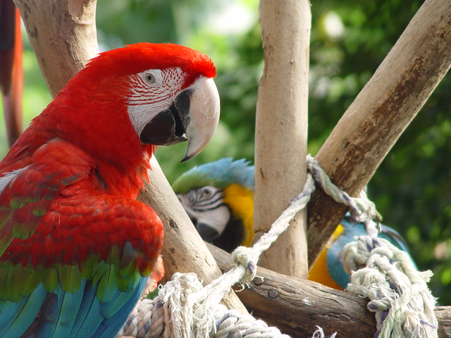 Singapore – Sentosa Nature Discovery