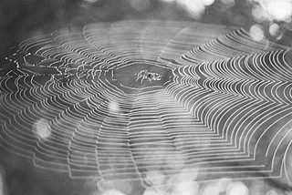 Spider Web | by Double_Nickel