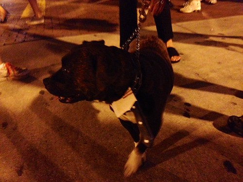 Zombiecon Fort Myers has gone to the dogs | by Erin *~*~*