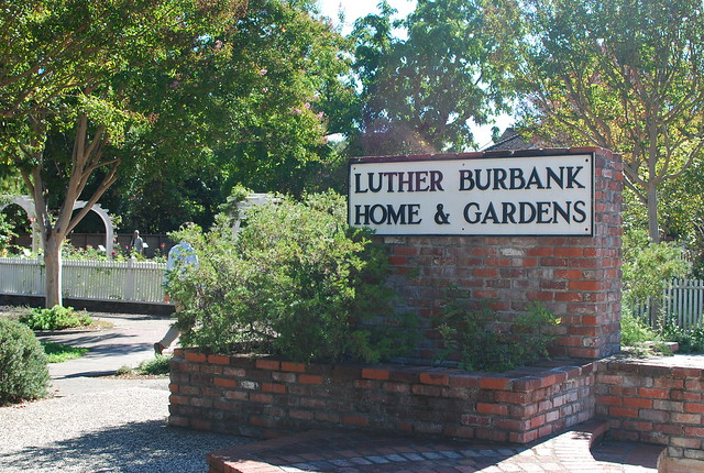Luther Burbank Home Gardens Explore Cbcastro 39 S Photos
