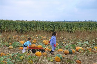 Hoffman's Dairy Garden - pumpkin patch, kids/wagon - 109 | by Mt. Hood Territory