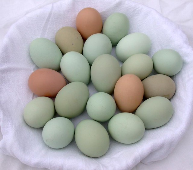 helicopter black with Ameraucana Chicken Eggs on Hh60 101 as well Ameraucana Chicken Eggs besides 5037261739 additionally 32336182683 besides Sikorsky 20UH 60L 20Black 20Hawk 20 S70A.