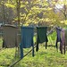 (24-12) Autumn colored laundry on the year round line