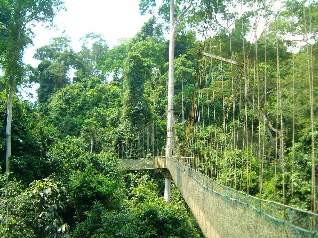 ... Kakum Canopy Walk Ghana | by tedesco57 & Kakum Canopy Walk Ghana | Kakum National Park is a 375 squau2026 | Flickr