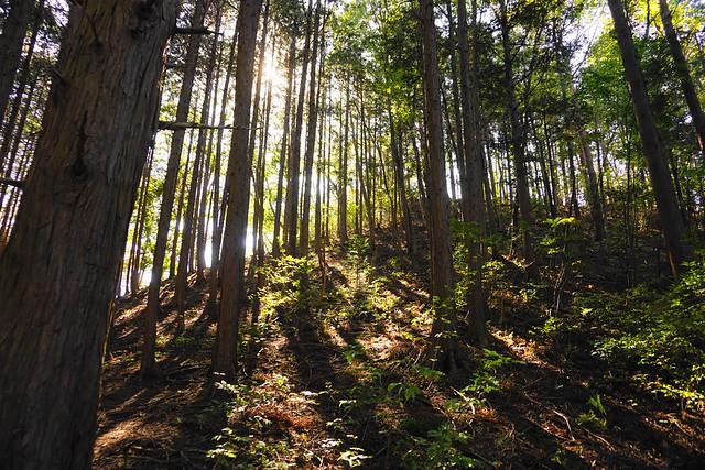 古賀志山 陽が差し込む森