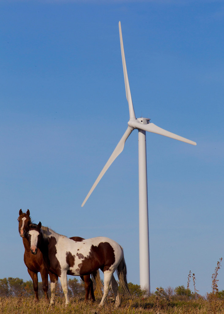 Horses Next To A Wind Turbine On Bp S Titan Wind Farm Sou