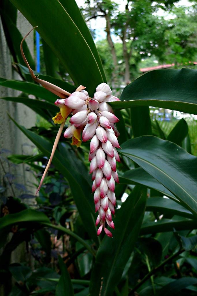 La flor y el lucifer chupando antes de aser el amor - 5 1